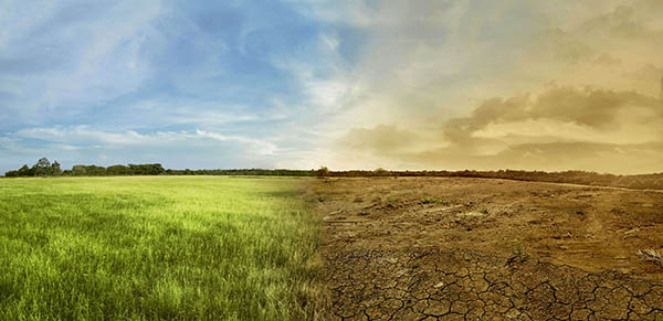 image depicting a healthy field on the left and a dead field on the right