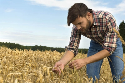 farmer inspecting crop